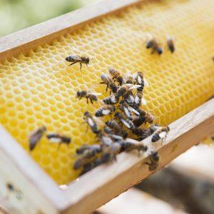 Alles für die Biene