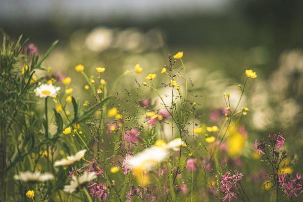 Blumenwiesenspende